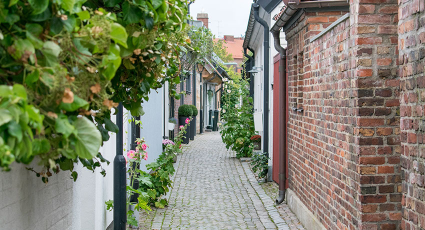 A alley with hollyhocks
