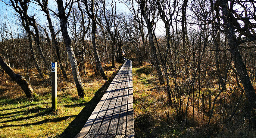 Path in Haverdal's nature reserve in Halmstad