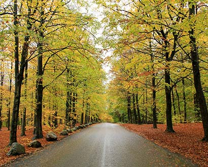 Autumnal beech forest at Galgberget in Halmstad